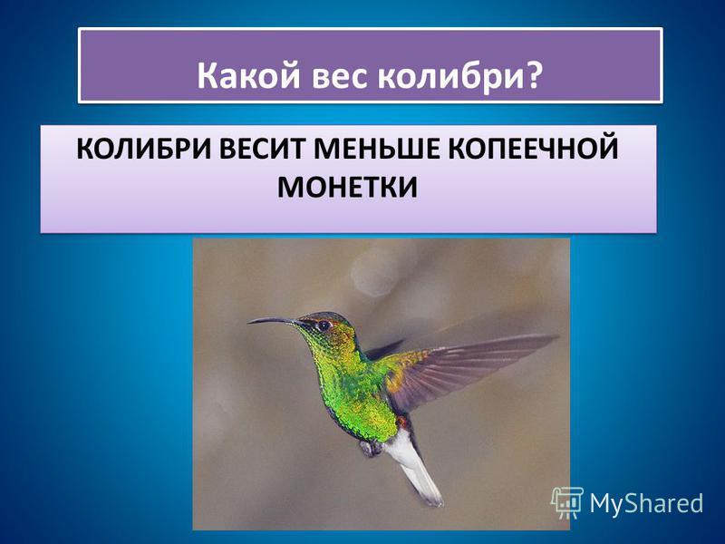 КОЛИБРИ ВЕСИТ МЕНЬШЕ КОПЕЕЧНОЙ МОНЕТКИ Какой вес колибри?