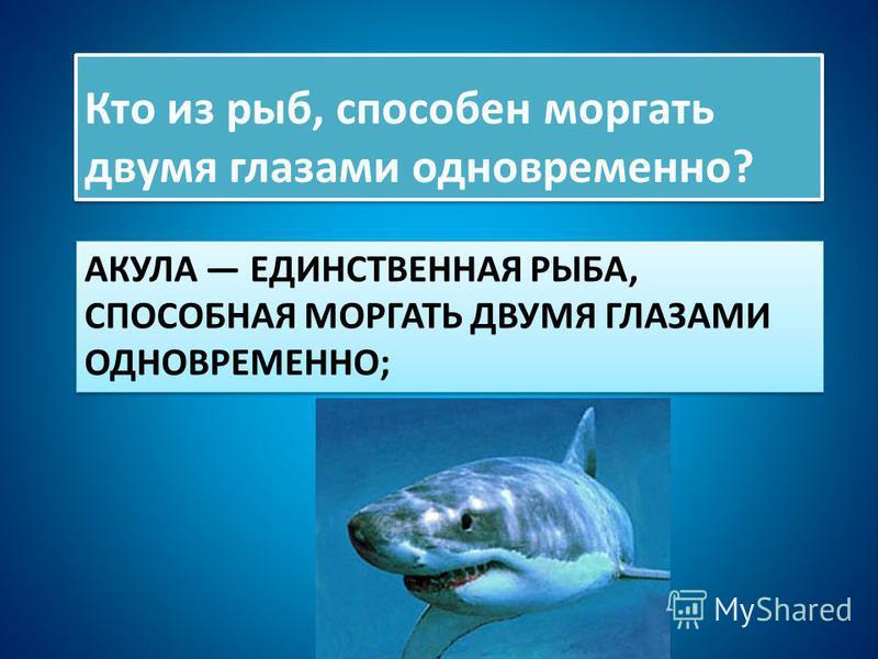 АКУЛА ЕДИНСТВЕННАЯ РЫБА, СПОСОБНАЯ МОРГАТЬ ДВУМЯ ГЛАЗАМИ ОДНОВРЕМЕННО; Кто из рыб, способен моргать двумя глазами одновременно?