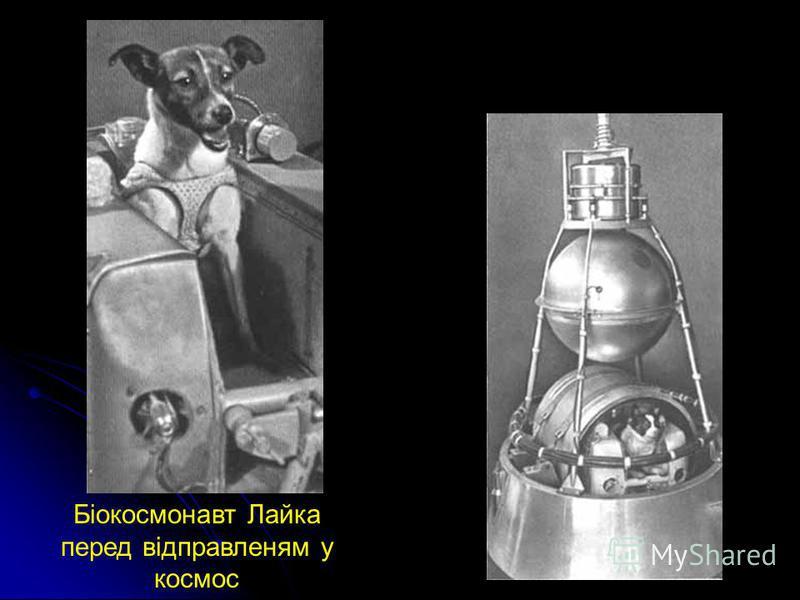 Біокосмонавт Лайка перед відправленям у космос Житлове відділення собаки