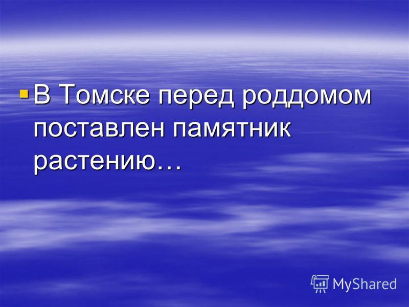 В Томске перед роддомом поставлен памятник растению… В Томске перед роддомом поставлен памятник растению…