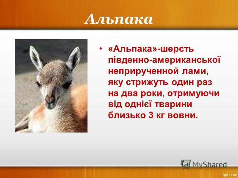 Альпака «Альпака»-шерсть південно-американської неприрученной лами, яку стрижуть один раз на два роки, отримуючи від однієї тварини близько 3 кг вовни.