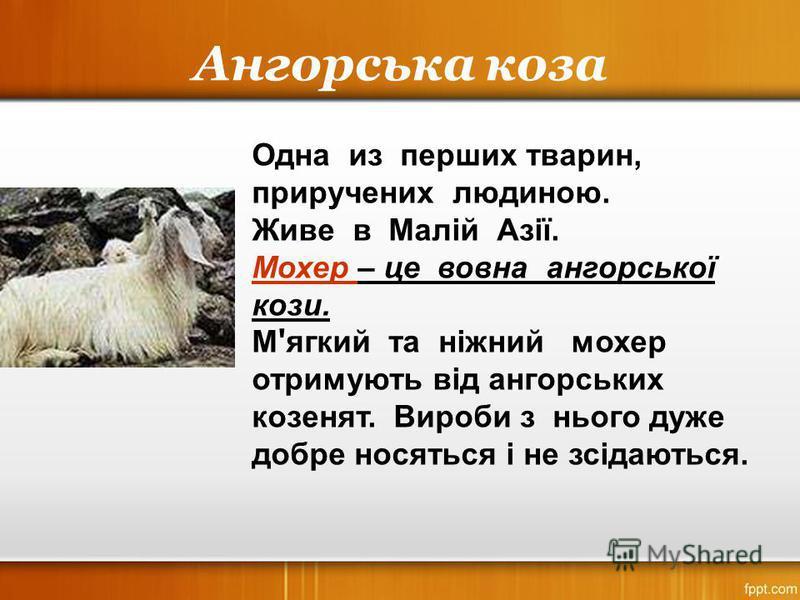 Ангорська коза Одна из перших тварин, приручених людиною. Живе в Малій Азії. Мохер – це вовна ангорської кози. М ' ягкий та ніжний мохер отримують від ангорських козенят. Вироби з нього дуже добре носяться і не зсідаються.