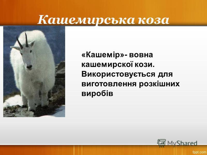 Кашемирська коза «Кашемір»- вовна кашемирскої кози. Використовується для виготовлення розкішних виробів