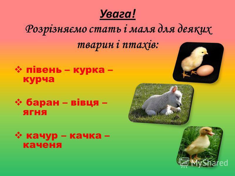 Увага! Розрізняємо стать і маля для деяких тварин і птахів: півень – курка – курча баран – вівця – ягня качур – качка – каченя