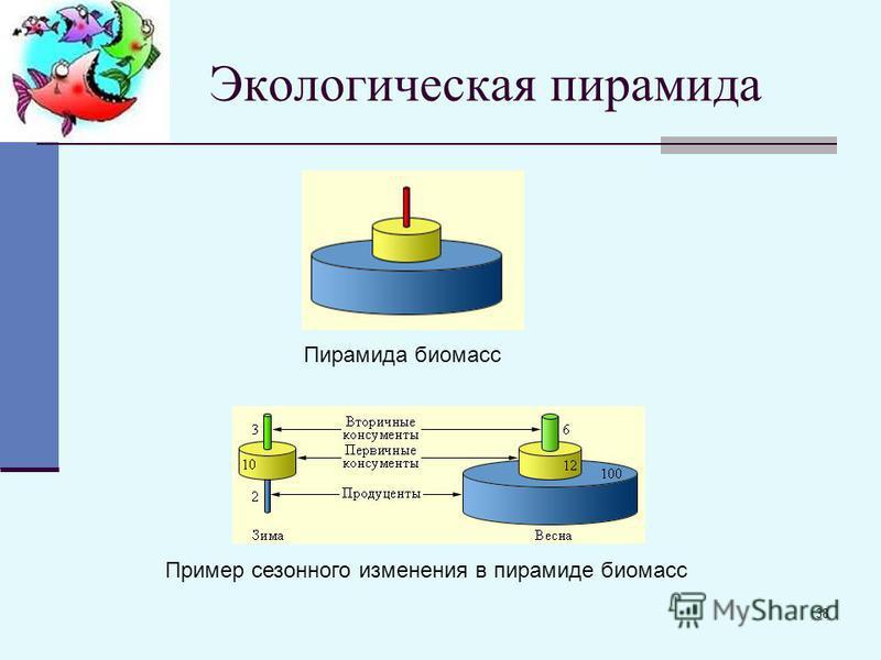 38 Экологическая пирамида Пирамида биомасс Пример сезонного изменения в пирамиде биомасс
