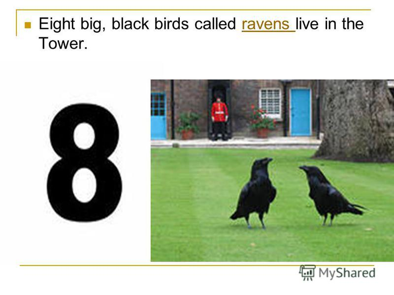 Eight big, black birds called ravens live in the Tower.ravens