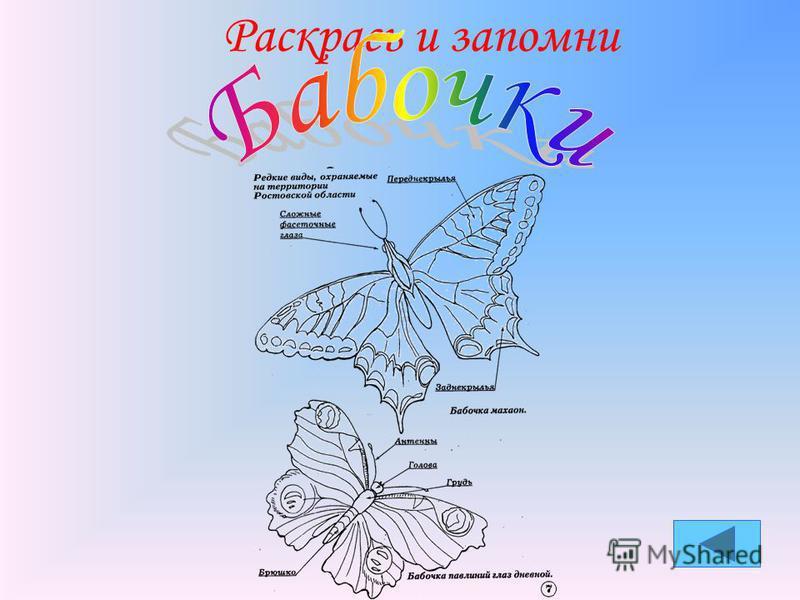 Учет численности животных Ростовской области
