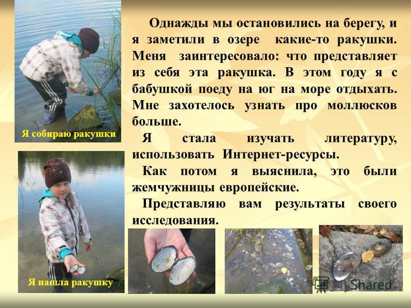 Однажды мы остановились на берегу, и я заметили в озере какие-то ракушки. Меня заинтересовало: что представляет из себя эта ракушка. В этом году я с бабушкой поеду на юг на море отдыхать. Мне захотелось узнать про моллюсков больше. Я стала изучать ли
