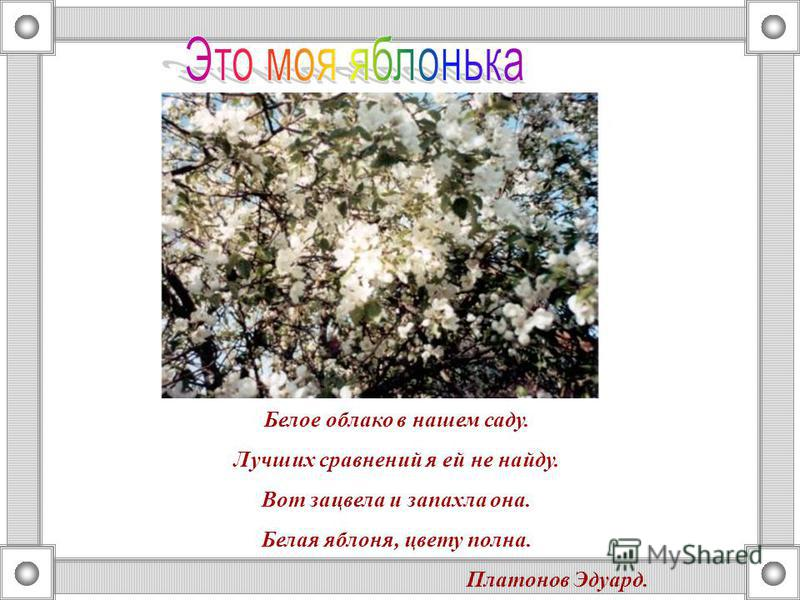 Белое облако в нашем саду. Лучших сравнений я ей не найду. Вот зацвела и запахла она. Белая яблоня, цвету полна. Платонов Эдуард.