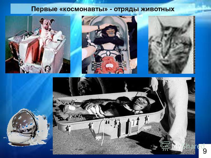 Первые «космонавты» - отряды животных 9