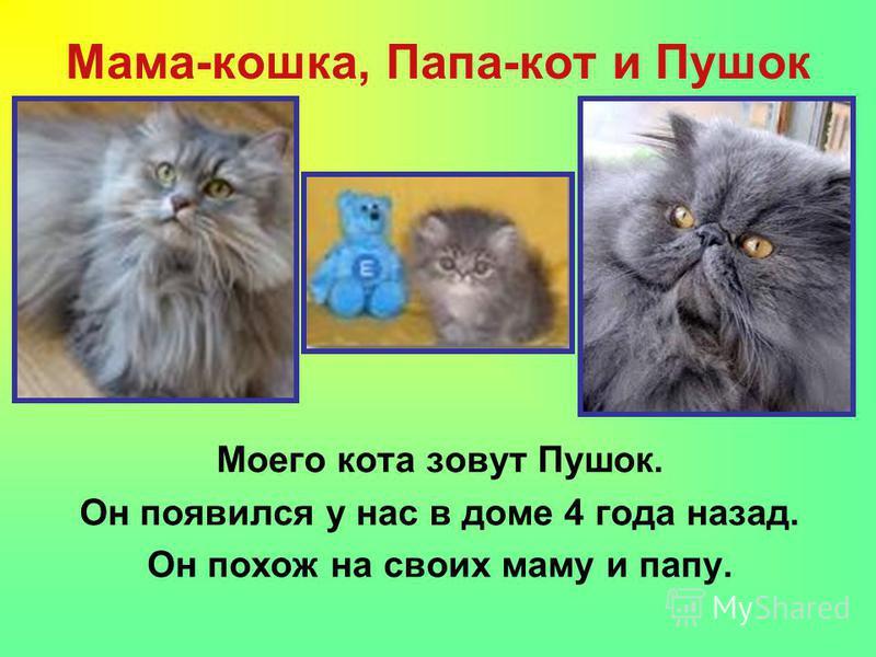 Мама-кошка, Папа-кот и Пушок Моего кота зовут Пушок. Он появился у нас в доме 4 года назад. Он похож на своих маму и папу.