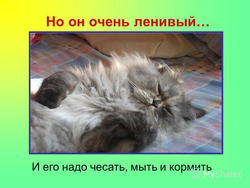 Но он очень ленивый… И его надо чесать, мыть и кормить