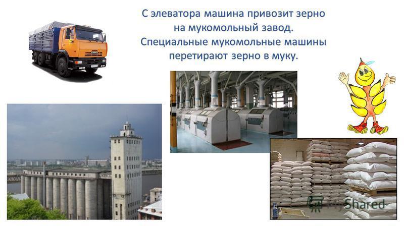 С элеватора машина привозит зерно на мукомольный завод. Специальные мукомольные машины перетирают зерно в муку.