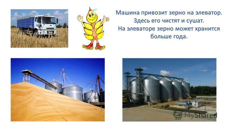 Машина привозит зерно на элеватор. Здесь его чистят и сушат. На элеваторе зерно может хранится больше года.