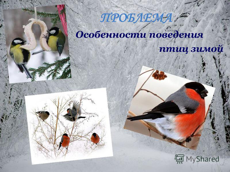ПРОБЛЕМА Особенности поведения птиц зимой