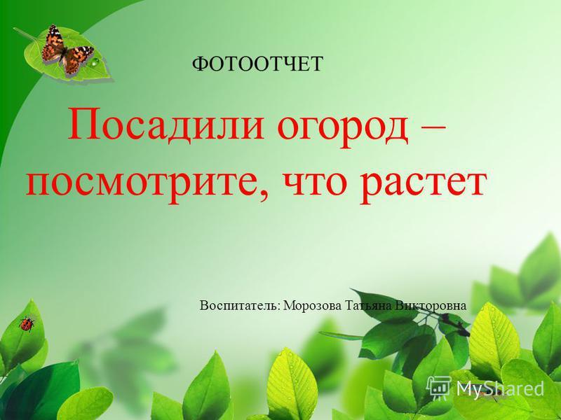 Воспитатель: Морозова Татьяна Викторовна ФОТООТЧЕТ Посадили огород – посмотрите, что растет