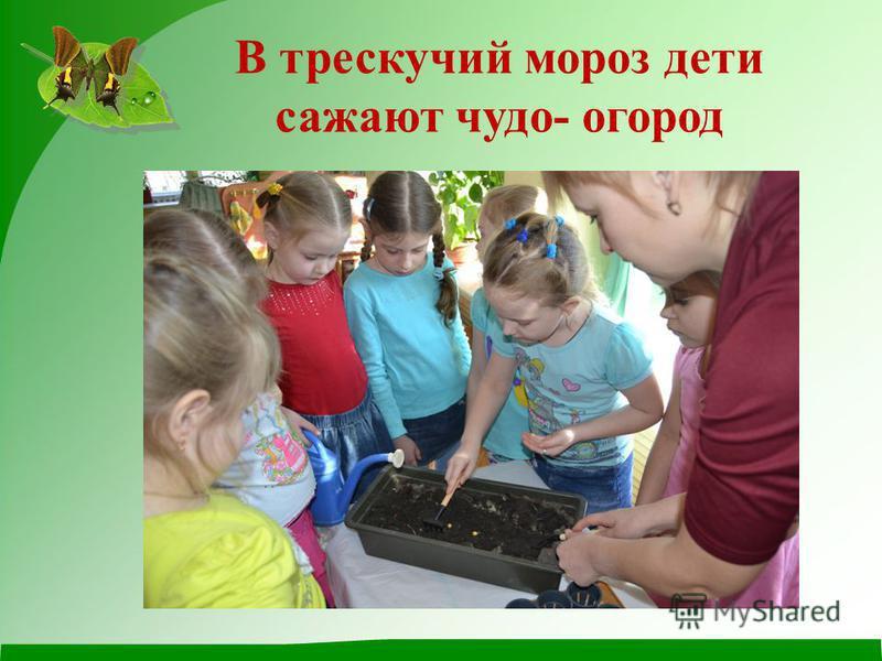 В трескучий мороз дети сажают чудо- огород
