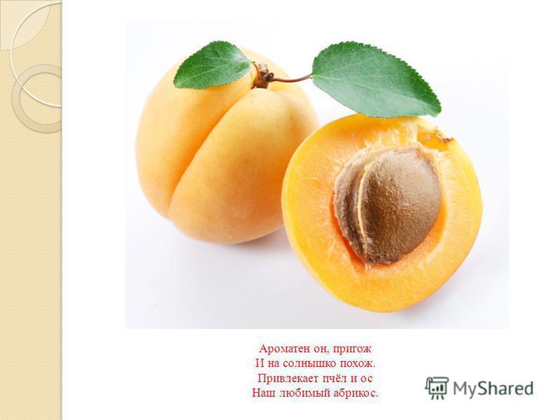 Ароматен он, пригож И на солнышко похож. Привлекает пчёл и ос Наш любимый абрикос.