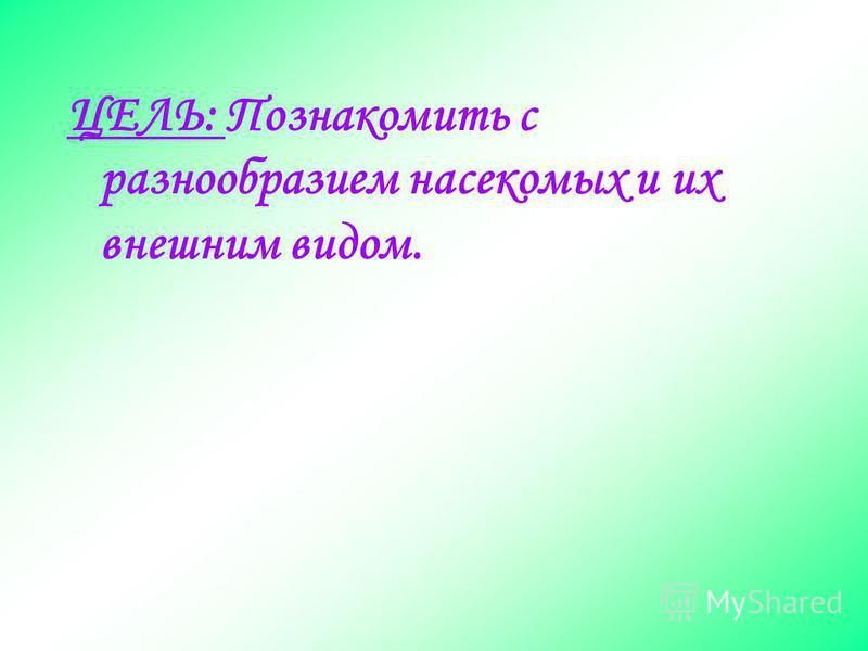 Насекомые Воспитатель – Макарова Наталья Владимировна