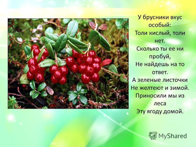 У брусники вкус особый: Толи кислый, толи нет. Сколько ты ее ни пробуй, Не найдешь на то ответ. А зеленые листочки Не желтеют и зимой. Приносили мы из леса Эту ягоду домой.