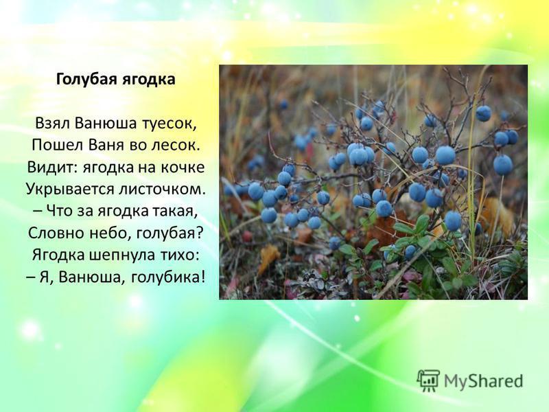 Голубая ягодка Взял Ванюша туесок, Пошел Ваня во лесок. Видит: ягодка на кочке Укрывается листочком. – Что за ягодка такая, Словно небо, голубая? Ягодка шепнула тихо: – Я, Ванюша, голубика!