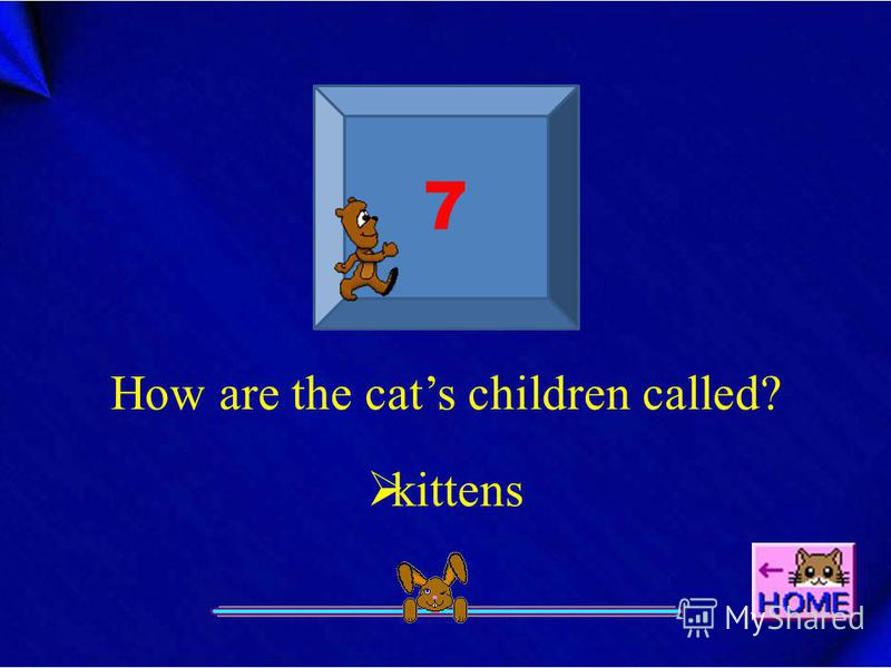 7 How are the cats children called? kittens