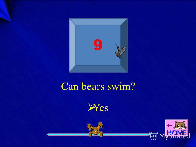 9 Can bears swim? Yes