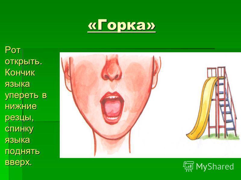 «Горка» Рот открыть. Кончик языка упереть в нижние резцы, спинку языка поднять вверх. Рот открыть. Кончик языка упереть в нижние резцы, спинку языка поднять вверх.