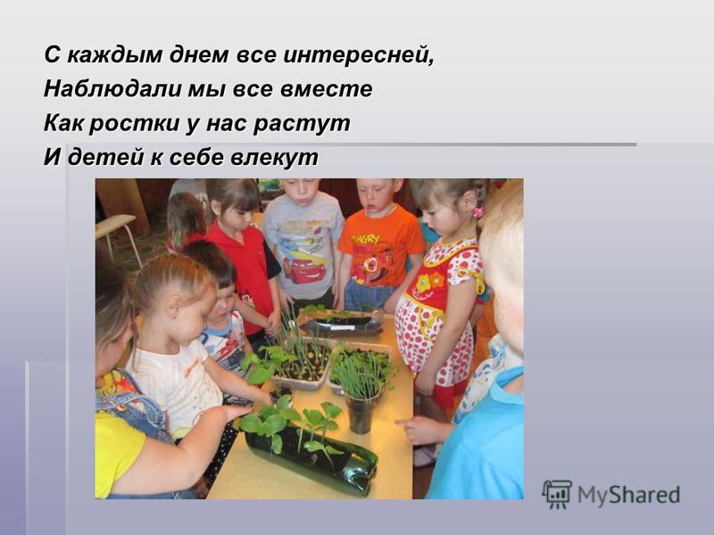 С каждым днем все интересней, Наблюдали мы все вместе Как ростки у нас растут И детей к себе влекут