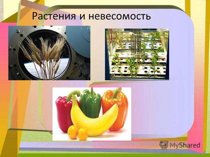 Растения и невесомость