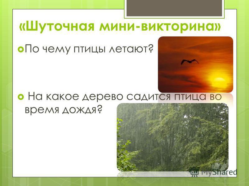 «Шуточная мини-викторина» По чему птицы летают? На какое дерево садится птица во время дождя?