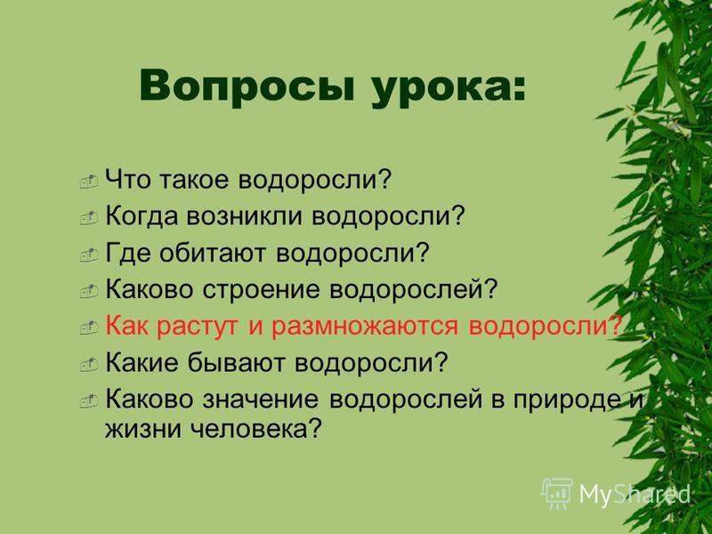 Вопросы урока: Что такое водоросли? Когда возникли водоросли? Где обитают водоросли? Каково строение водорослей? Как растут и размножаются водоросли? Какие бывают водоросли? Каково значение водорослей в природе и жизни человека?