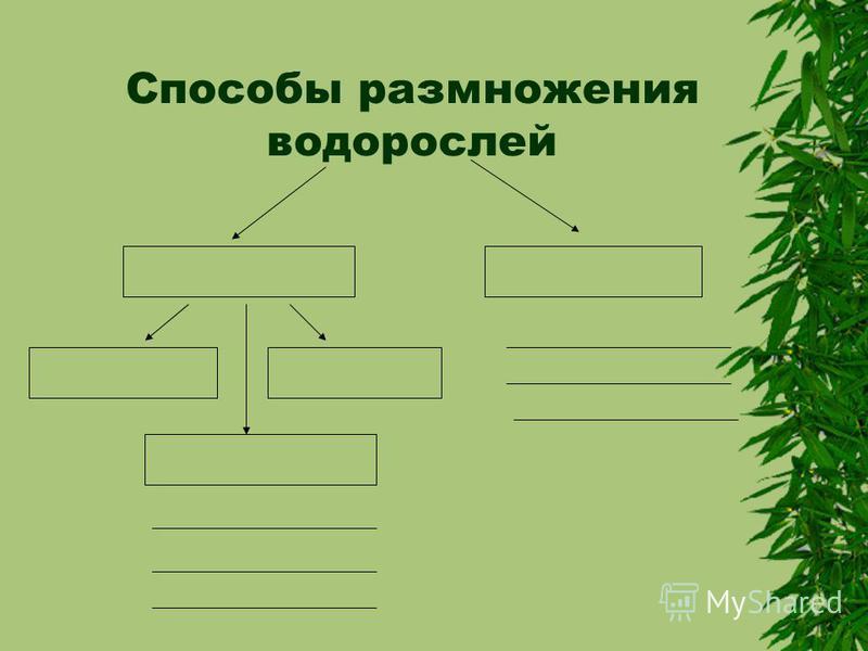Способы размножения водорослей