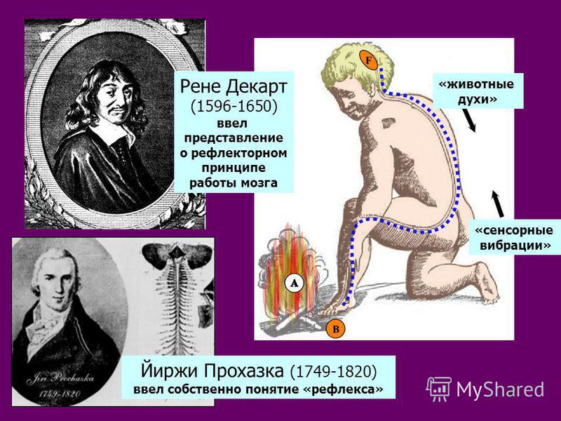 9 Рене Декарт (1596-1650) ввел представление о рефлекторном принципе работы мозга Йиржи Прохазка (1749-1820) ввел собственно понятие «рефлекса» «животные духи» «сенсорые вибрации»