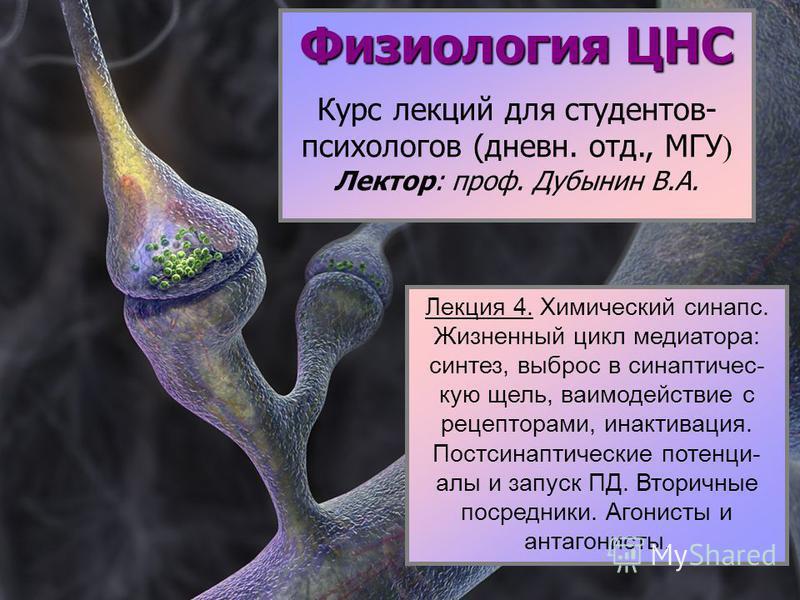1 Лекция 4. Химический синапс. Жизненный цикл медиатора: синтез, выброс в синаптичес- кую щель, взаимодействие с рецепторами, инактивация. Постсинаптические потенциалы и запуск ПД. Вторичные посредники. Агонисты и антагонисты. Физиология ЦНС Физиолог