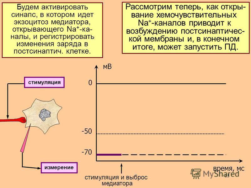 15 ВтП – особый класс регуляторных в-в, по значимости не уступающий гормонами медиаторам. Пример ВтП: цАМФ – циклическая аденозин-моно- фосфорная кислота, образуемая из АТФ ферментом аденилатциклазой. Рассмотрим теперь, как открывание хемо чувствител