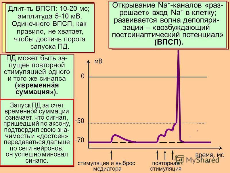Рассмотрим теперь, как открывание хемо чувствительных Na + -каналов приводит к возбуждению пост сынаптичес- кой мембраны и, в конечном итоге, может запустить ПД. 16 ВтП – особый класс регуляторных в-в, по значимости не уступающий гормонами медиаторам