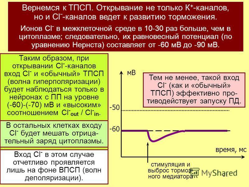 21 время, мс мВ -50 -60 стимуляция и выброс тормоз- ного медиатора Вернемся к ТПСП. Открывание не только К + -каналов, но и Cl - -каналов ведет к развитию торможения. Ионов Cl - в межклеточной среде в 10-30 раз больше, чем в цитоплазме; следовательно