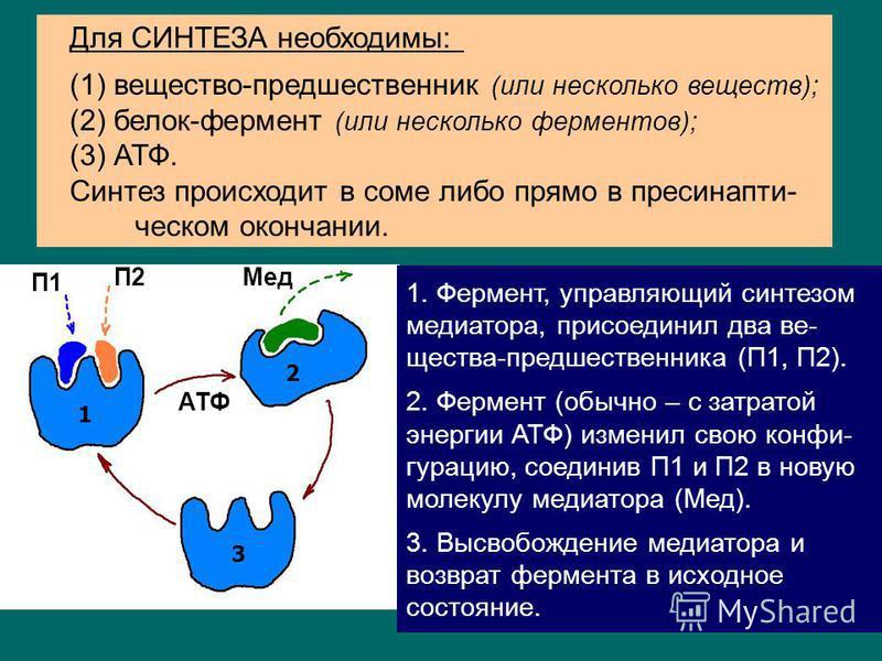 6 синтез и накопление в пресинаптичешском окончании; выброс в синаптичешскую щель при появлении ПД; действие на рецепторы пост сынаптической мембраны (запуск возбуждения или торможения пост сынаптической клетки); инактивация (прекращение действия мед