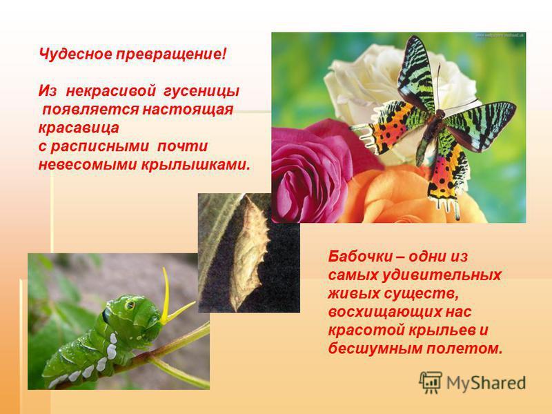 Чудесное превращение! Из некрасивой гусеницы появляется настоящая красавица с расписными почти невесомыми крылышками. Бабочки – одни из самых удивительных живых существ, восхищающих нас красотой крыльев и бесшумным полетом.