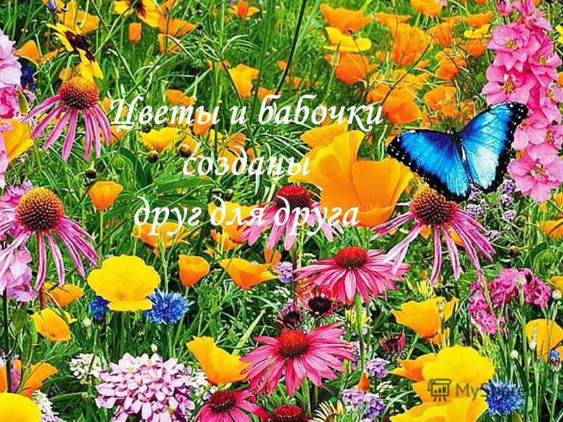 Цветы и бабочки созданы друг для друга