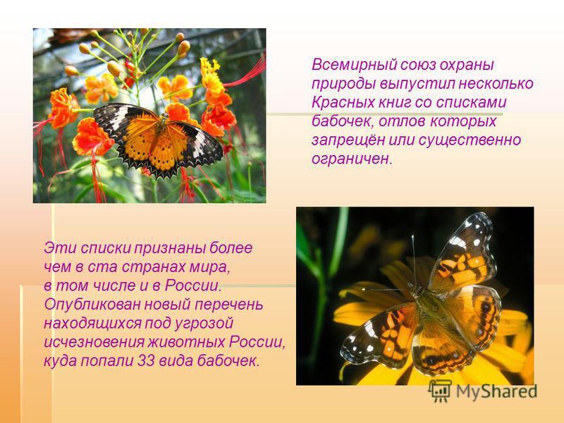 Всемирный союз охраны природы выпустил несколько Красных книг со списками бабочек, отлов которых запрещён или существенно ограничен. Эти списки признаны более чем в ста странах мира, в том числе и в России. Опубликован новый перечень находящихся под
