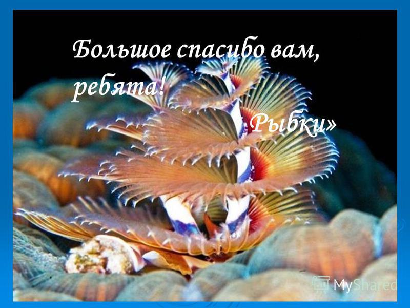 Большое спасибо вам, ребята! Рыбки»