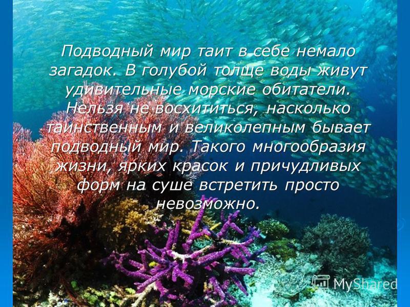 Подводный мир таит в себе немало загадок. В голубой толще воды живут удивительные морские обитатели. Нельзя не восхититься, насколько таинственным и великолепным бывает подводный мир. Такого многообразия жизни, ярких красок и причудливых форм на суше