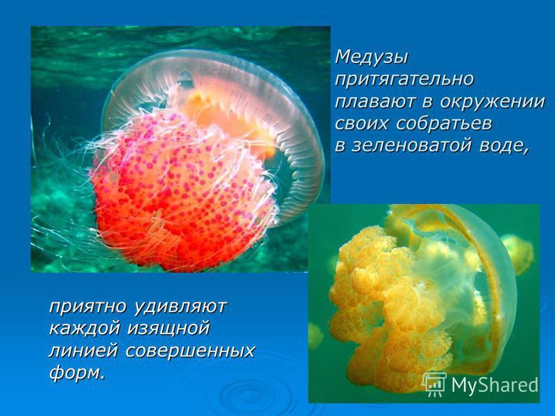 Медузы притягательно плавают в окружении своих собратьев в зеленоватой воде, приятно удивляют каждой изящной линией совершенных форм.