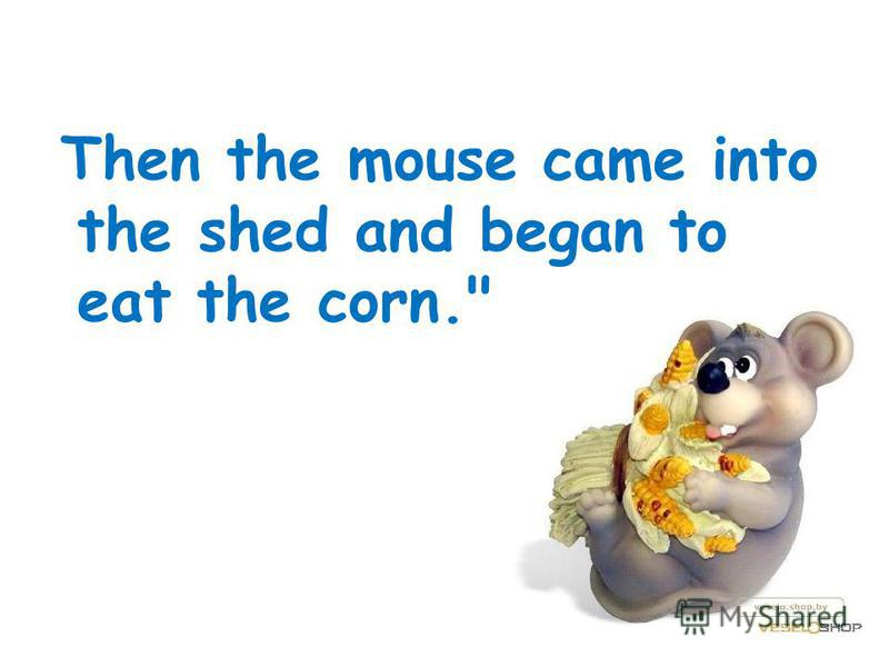 Then the mouse came into the shed and began to eat the corn.