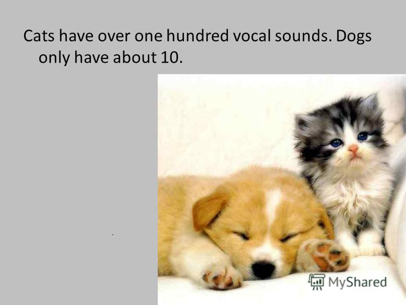 Cats have over one hundred vocal sounds. Dogs only have about 10.