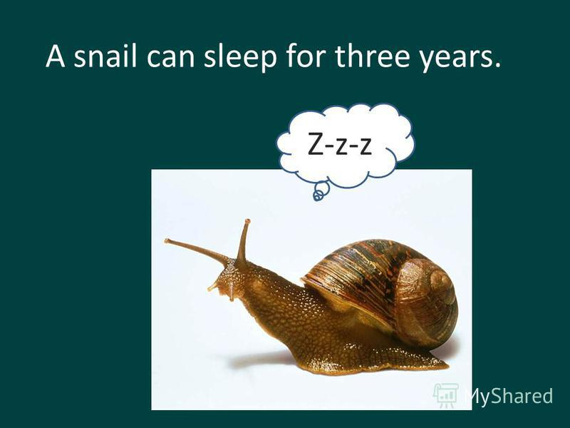 A snail can sleep for three years. Z-z-z