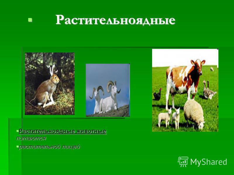 Растительноядные Растительноядные Растительноядные животные питаются Растительноядные животные питаются растительной пищей растительной пищей