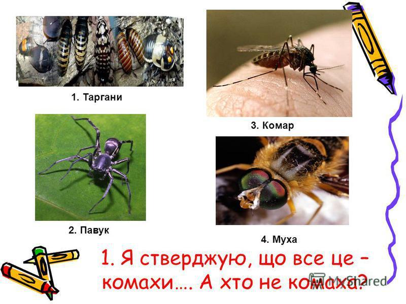 1. Я стверджую, що все це – комахи…. А хто не комаха? 1. Таргани 2. Павук 3. Комар 4. Муха